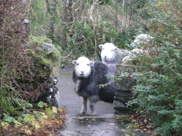 Herdy's visiting How Head